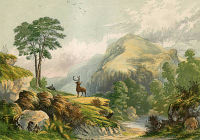 Woodland Drawing - Wild Deer by Alexander Francis Lydon