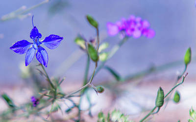 Photograph - Wild Delphinium Flower by Jenny Rainbow