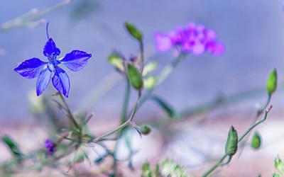 Photograph - Wild Delphinium Flower by Jenny Rainbow