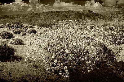 Art Print featuring the photograph Wild Desert Flowers Blooming In Sepia Tone  by Randall Nyhof
