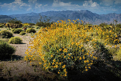 Photograph - Wild Desert Flowers Blooming by Randall Nyhof