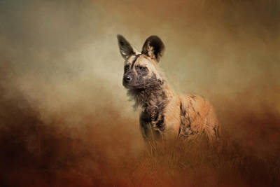Photograph - Wild Dog by Michele Wright