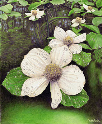Painting - Wild Dogwood by Rhonda Dicksion