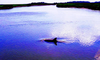 Photograph - Wild Dolphin by Patricia Greer