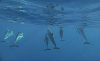 Photograph - Wild Dolphins by Art Atkins