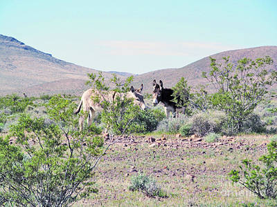 Donkey Digital Art - Wild Donkey Pair by J Marielle