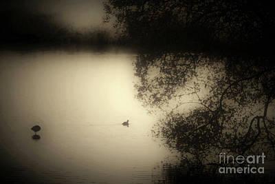 Wild Duckpond Art Print by Ron Evans
