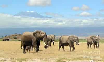 Photograph - Wild Elephants On The Horizon Mount Kilimanjaro Tanzania Posters Canvas Tshirt Pillows Curtains Gift by Navin Joshi