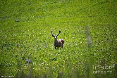 Photograph - Wild Elk by Susan Herber