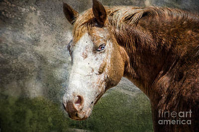 Digital Art - Wild Eyed Horse by Georgianne Giese