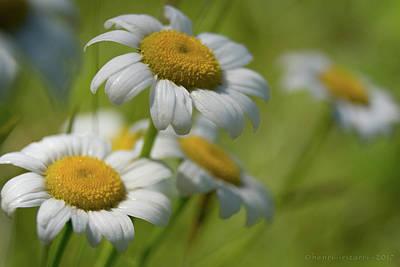 Photograph - Wild Field Daisies by Henri Irizarri