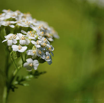 Photograph - Wild Field Flowers by Henri Irizarri