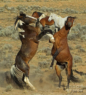 Photograph - Wild Fighting Horse-signed-#2727 by J L Woody Wooden