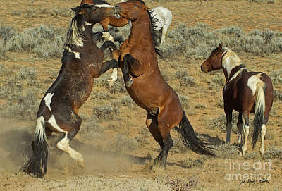 Photograph - Wild Fighting Horses-signed-#2724 by J L Woody Wooden