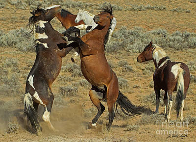 Photograph - Wild Fighting Horses-signed-#2725 by J L Woody Wooden