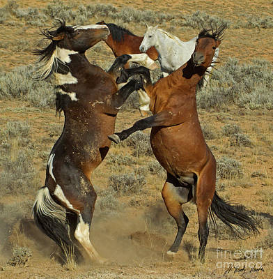 Photograph - Wild Fighting Horses-signed-#2726 by J L Woody Wooden