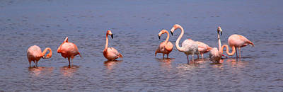 Photograph - Wild Flamingos by Karen Lindquist
