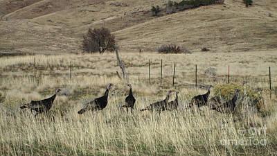 Pennypack Photograph - Wild Turkeys by Stephanie  Skeem