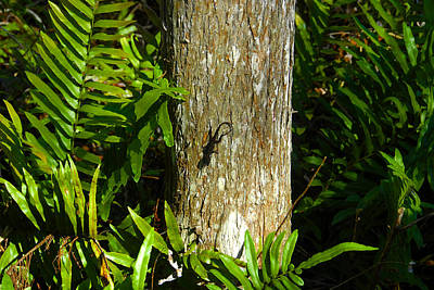 Photograph - Wild Florida And Anole by David Lee Thompson