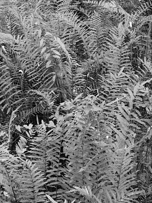 Photograph - Wild Florida Ferns by Juergen Roth