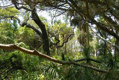 Woodscape Photograph - Wild Florida In Green by Sheri McLeroy