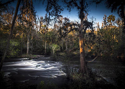 Palmetto Plants Photograph - Wild Florida by Marvin Spates