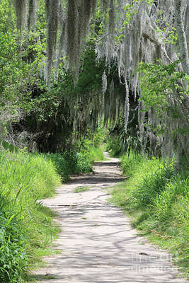 Photograph - Wild Florida Nature Path by Carol Groenen