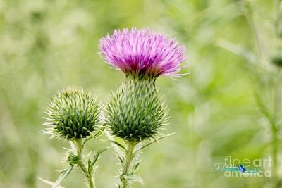 Food And Flowers Still Life - Wild Flower 2 by Jannice Walker
