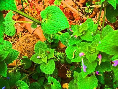 Photograph - Wild Flower Brightened by Skyler Tipton