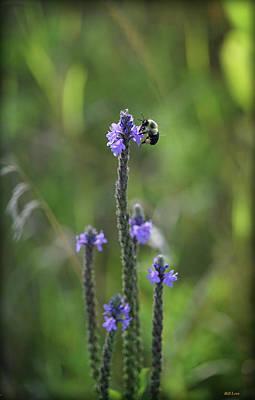 Photograph - Wild Flower Guest by Bill Lere