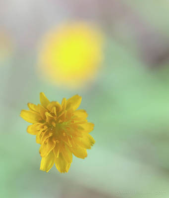 Photograph - Wild Flower by Henri Irizarri
