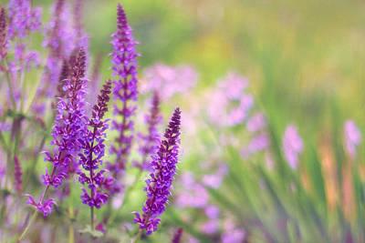 Photograph - Wild Flower by Jessica Jenney