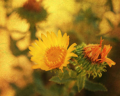 Wild Flowers Mixed Media - Wild Flower by Julie Hamilton