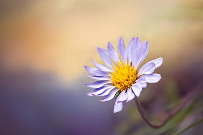 Photograph - Lone Flower by Maria Coulson