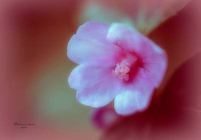 Photograph - Wild Flower by Marvin Spates