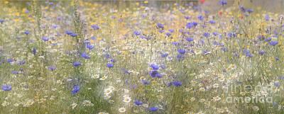 Photograph - Wild Flower Meadow by Tony Mills