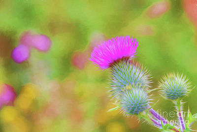 Royalty-Free and Rights-Managed Images - Wild flower by Veikko Suikkanen