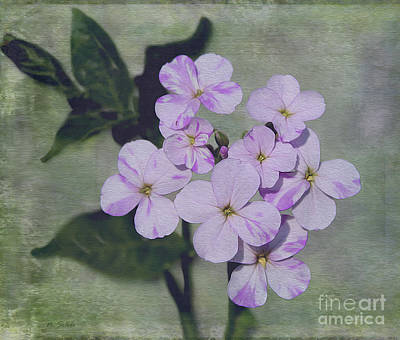 Photograph - Wild Flower Wonders by Nina Silver