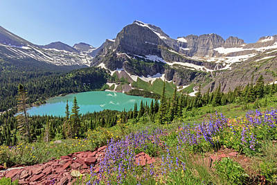 Photograph - Wild Flowers Above Grinnell Lake by Jack Bell