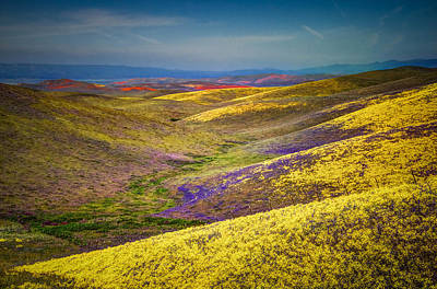 Photograph - Wild Flowers And Hills by Connie Cooper-Edwards