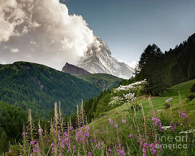 Photograph - Wild Flowers And The Matterhorn by Alissa Beth Photography