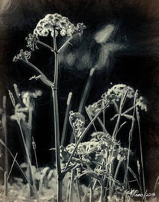 Digital Art - Wild Flowers And Weeds by Ken Morris