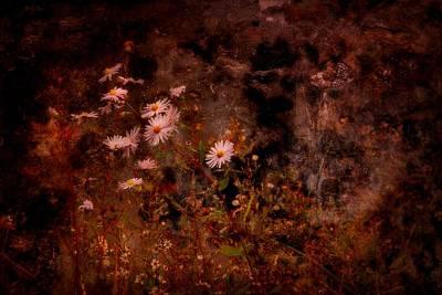 Photograph - Wild Flowers by Angie Tirado