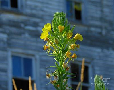 Photograph - Wild Flowers At Abandoned Hotel by Donna Cavanaugh