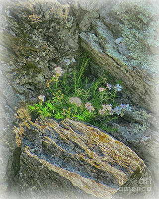 Photograph - Wild Flowers Between The Rocks by Dawn Gari