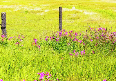 Photograph - Wild Flowers  By The  Fence by Nancy Marie Ricketts