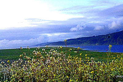 Photograph - Wild Flowers - Clouds - Big Lagoon  by Joseph Coulombe
