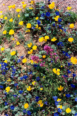 Wild Flowers Art Print by Eliot LeBow