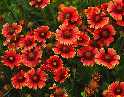 Wild Flowers In Field Color Art Print Art Print by Randy Steele