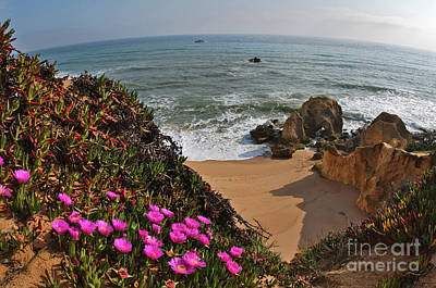 Photograph - Wild Flowers In Gale Beach With Fish-eye by Angelo DeVal
